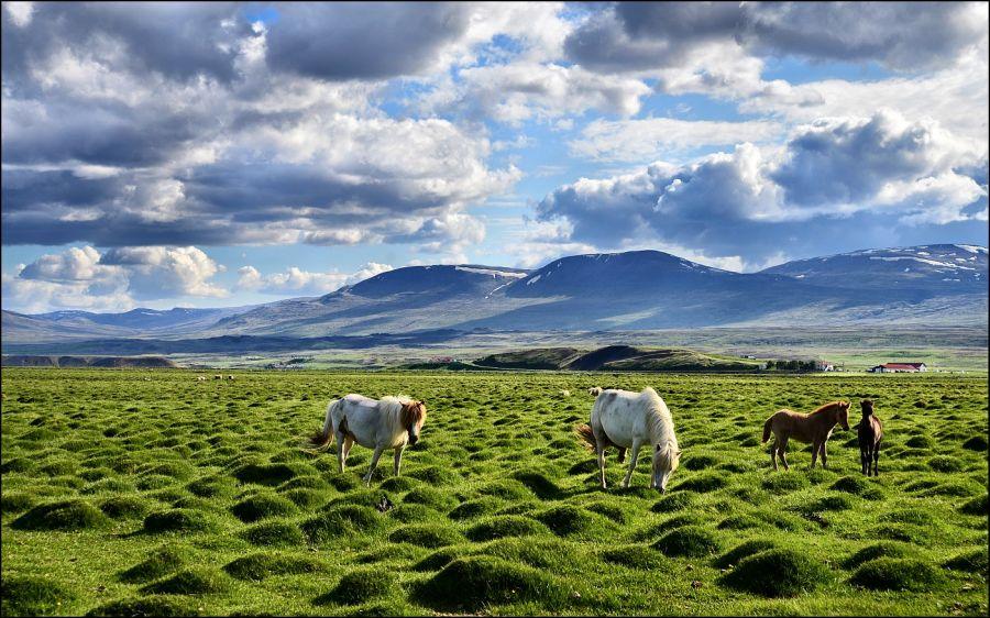 Iceland_TF-ON6KE_Tourist
